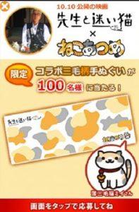 www.sensei-neko.com