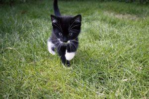 くつした猫1