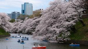 あいことば今日3月27日桜